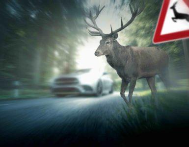 """Ein Hirsch läuft auf die Straße. Im Vordergrund ist ein """"Achtung Wildwechsel""""-Schild zu sehen. Im Hintergrund fährt ein Auto auf der Straße."""